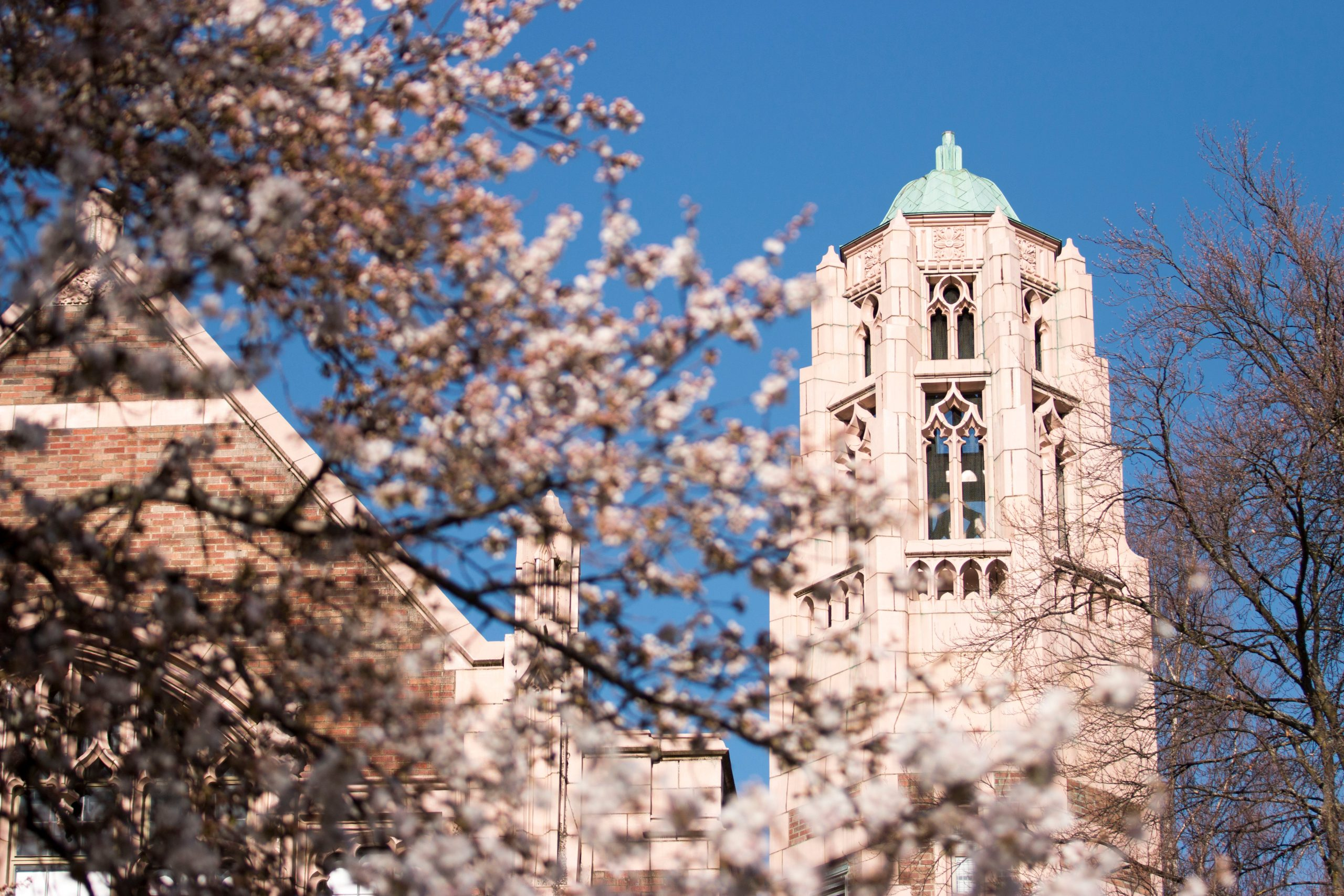 Art Building turret behind cherry blossoms