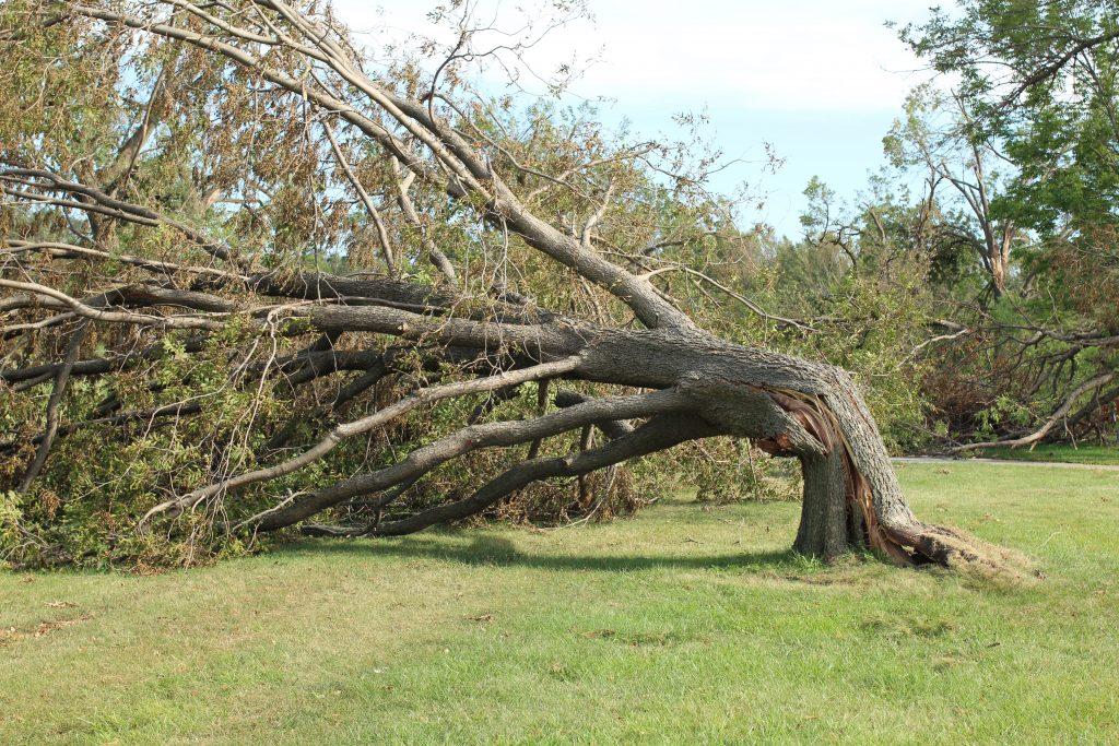 Documentation image of a fallen tree.